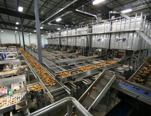 Potato Processing Machinery at Mart Produce