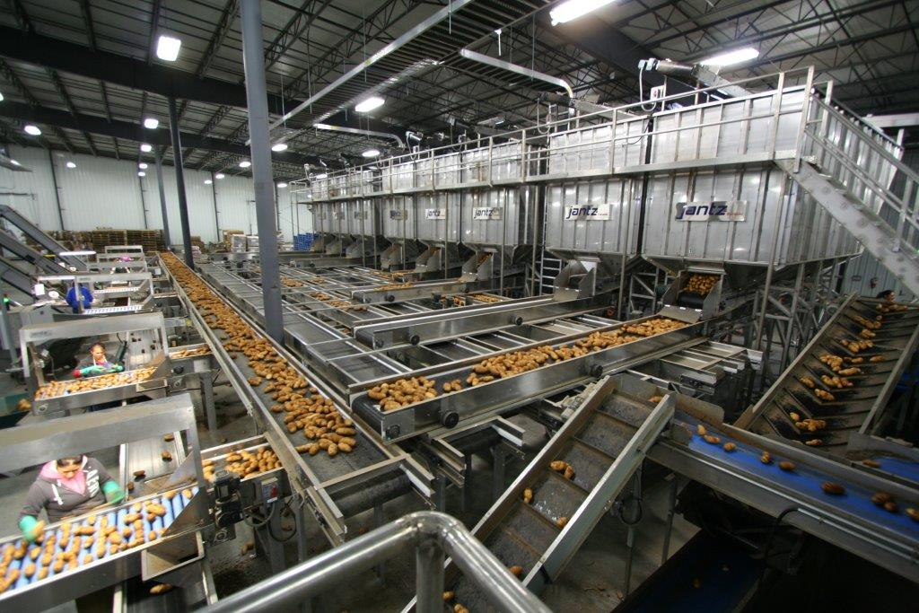 Potato Processing Machinery Evenflow Storage Bins
